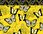 Bonjour Butterfly