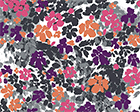 Funky Floral Camo